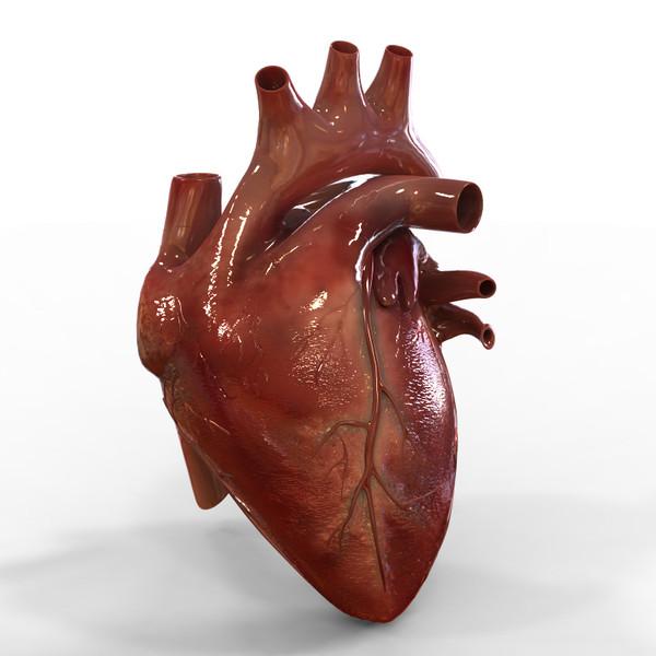 coração artifical impresso 3d